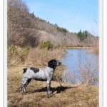 Auvergne: Chasse au domaine de Raboulet