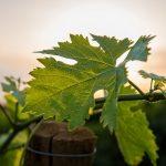 Quand l'informatique simplifie la vie des viticulteurs et vignerons