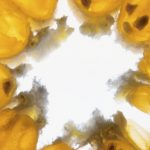 La vitamine D est-elle une vitamine miraculeuse ?