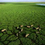 Cap sur les parcs remarquables du Kenya